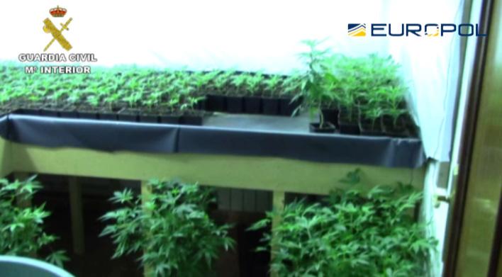 La guardia civil desmantela dos plantaciones de marihuana for Produccion marihuana interior