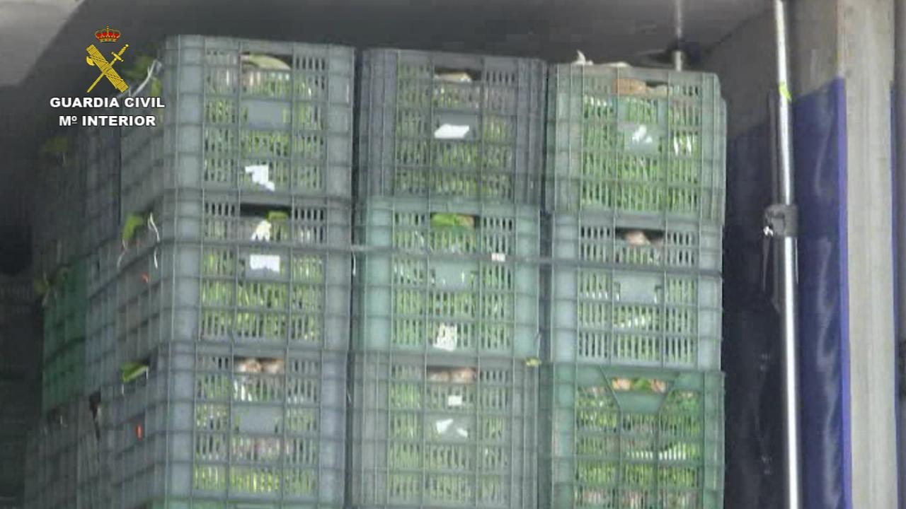 La Guardia Civil incauta 2.200 kilos de hachís ocultos entre 12 toneladas de acelgas