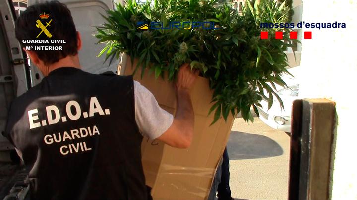 Detenidas 52 personas pertenecientes a una organización criminal dedicada a la distribución de marihuana y al tráfico de armas en Europa