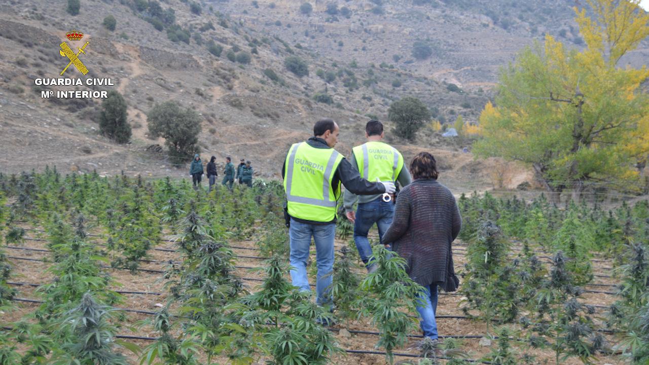 La Guardia Civil desmantela en un pueblo de Teruel la mayor plantación de marihuana localizada en Aragón