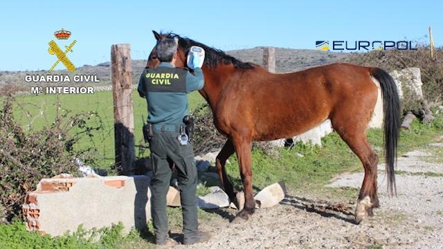 La Guardia Civil en coordinación con EUROPOL desmantela una red que comerciaba con carne de caballo no apta para el consumo