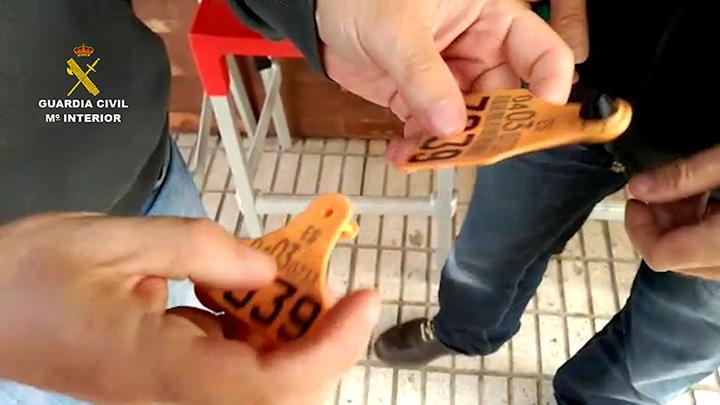 La Guardia Civil desmantela dos organizaciones dedicadas a comercializar ilegalmente ganado vacuno