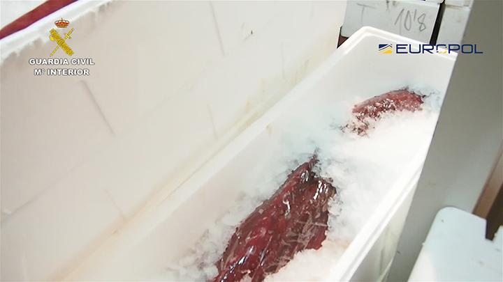 La Guardia Civil detiene a 79 personas que comercializaban atunes pescados ilegalmente y con irregularidades sanitarias