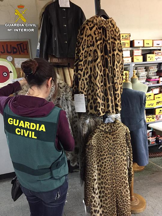 La Guardia Civil detiene o investiga a 203 personas y aprehende más de 2.000 especímenes de especies de fauna protegidas