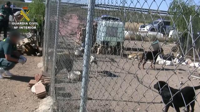 La Guardia Civil detiene a un criador de perros por un delito de maltrato animal