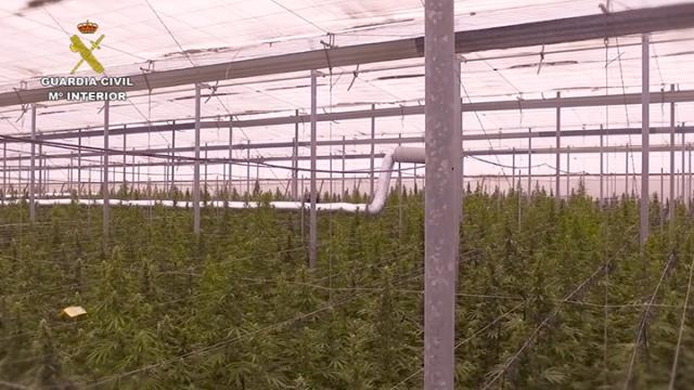 La Guardia Civil desarticula una red internacional dedicada al cultivo de marihuana a gran escala en Almería, Murcia y Alicante