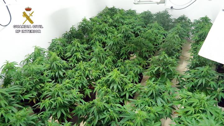 La Guardia Civil interviene más de 1.200 plantas de marihuana en las estancias subterráneas de 5 viviendas unifamiliares