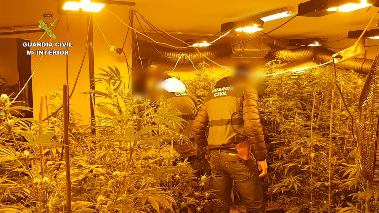 La Guardia Civil desarticula una peligrosa organización delictiva especializada en el cultivo y modificación genética de marihuana