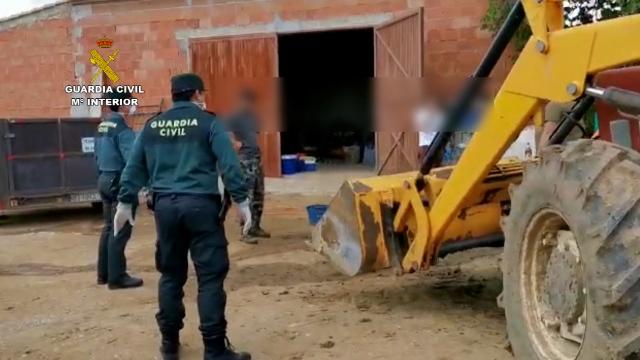 La Guardia Civil sorprende a un grupo de personas realizando la matanza de un cerdo sin justificación y sin las medidas de seguridad