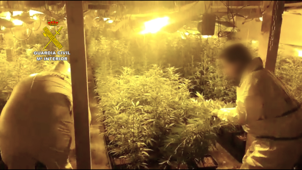 Incautadas más de 13.000 plantas de marihuana en varias operaciones de la Guardia Civil