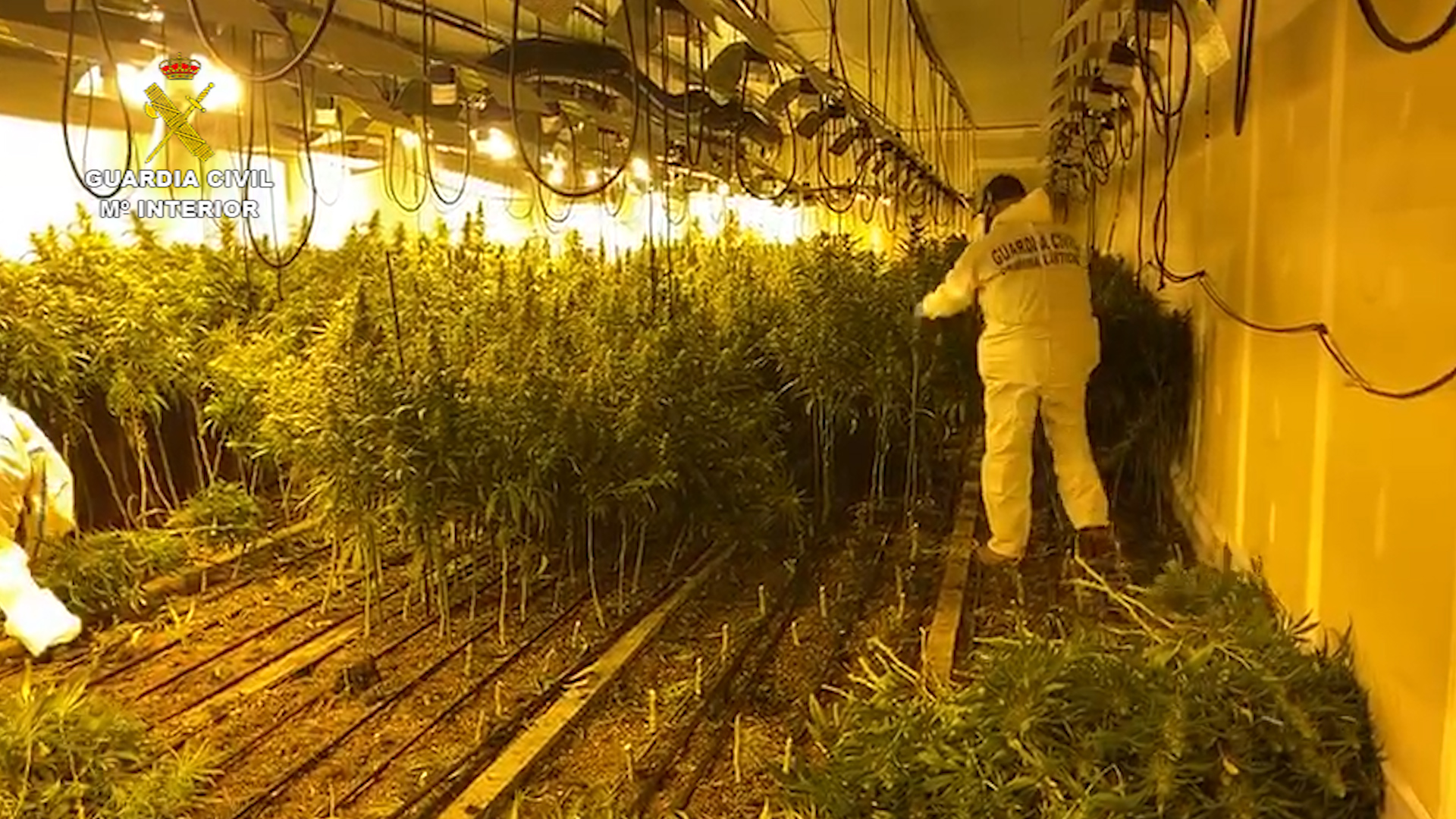 "La Guardia Civil desmantela en Llinars del Vallès dos ""narconaves"" donde se producía marihuana industrialmente"
