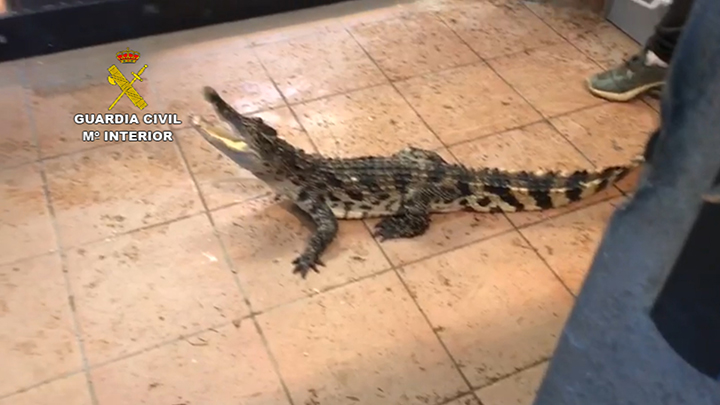 La Guardia Civil interviene en una finca de Sant Vicenç de Montalt reptiles catalogados como especies protegidas