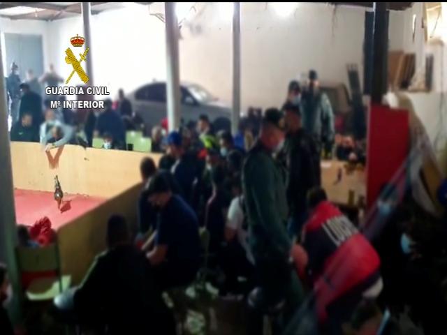La Guardia Civil disuelve una pelea de gallos ilegal donde se concentraban cerca de 90 personas