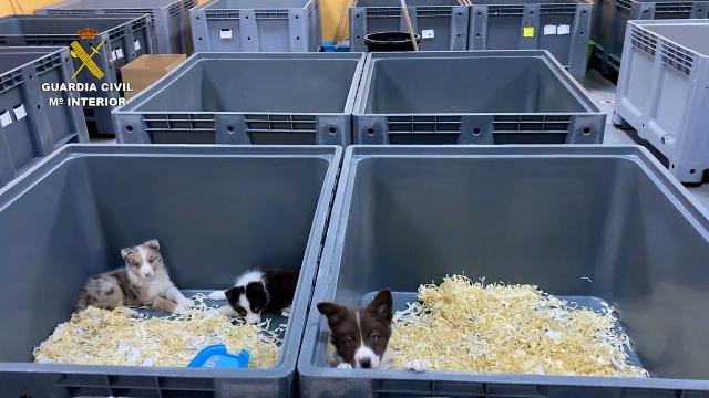 La Guardia Civil detiene a 5 miembros de una red dedicada a la venta de cachorros de perro enfermos
