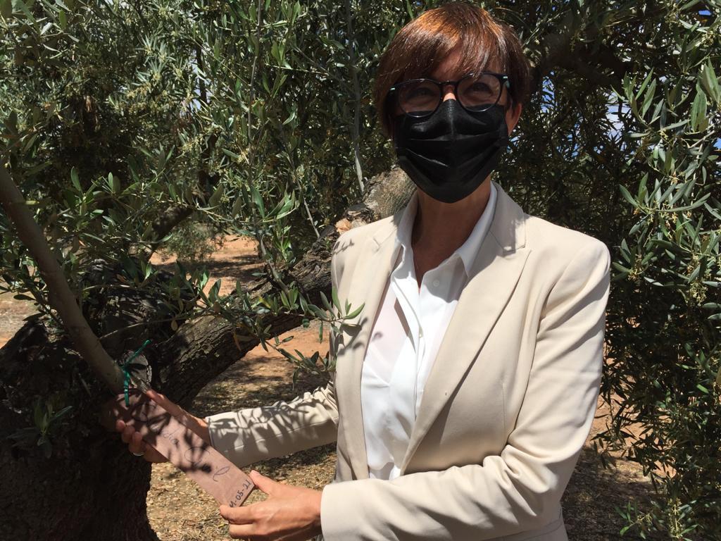 La Fundación Guardia Civil colabora con la Fundación Lumière apadrinando olivos solidarios en el proyecto El Aceite de la Vida