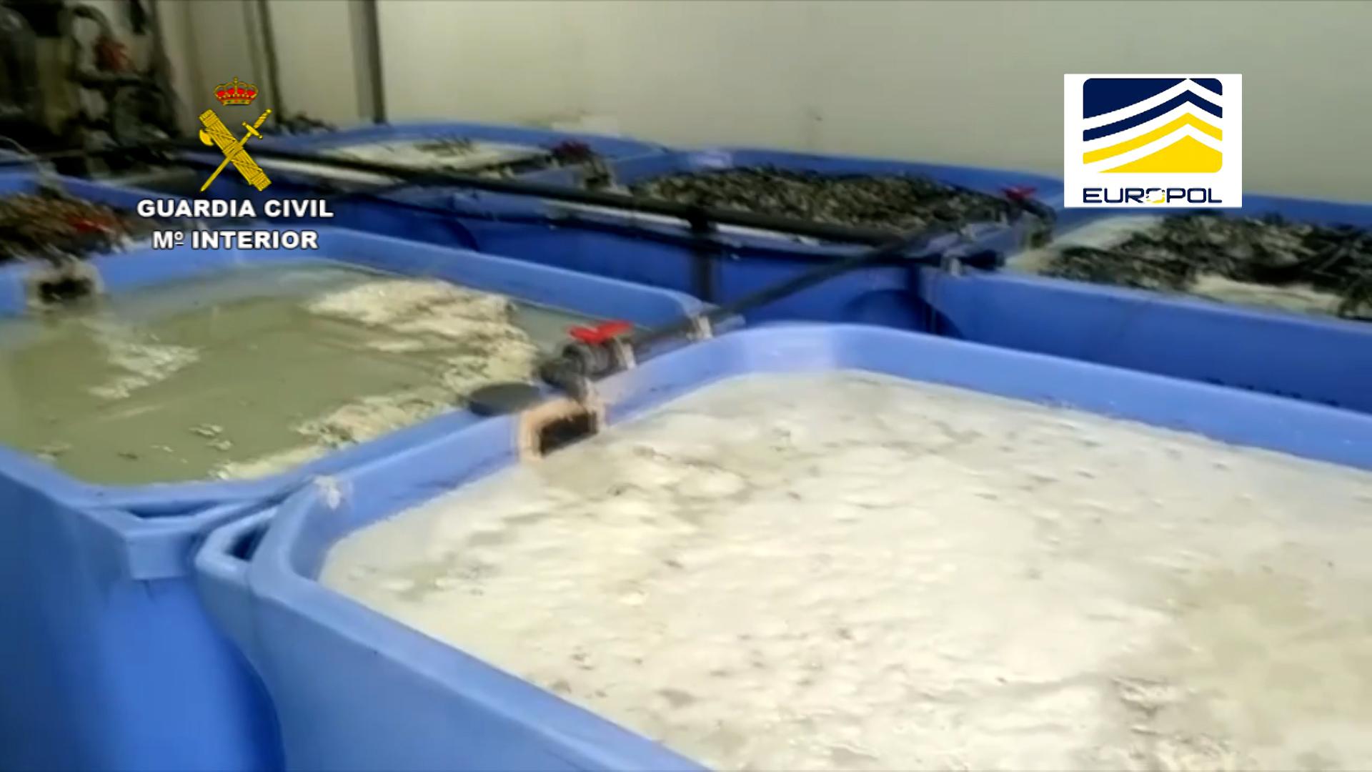 La Guardia Civil interviene 16 toneladas de moluscos procedentes del marisqueo ilegal