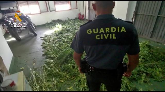 Intervenidas más de 7.000 plantas de cannabis en una macrooperación realizada en Atarfe (Granada)