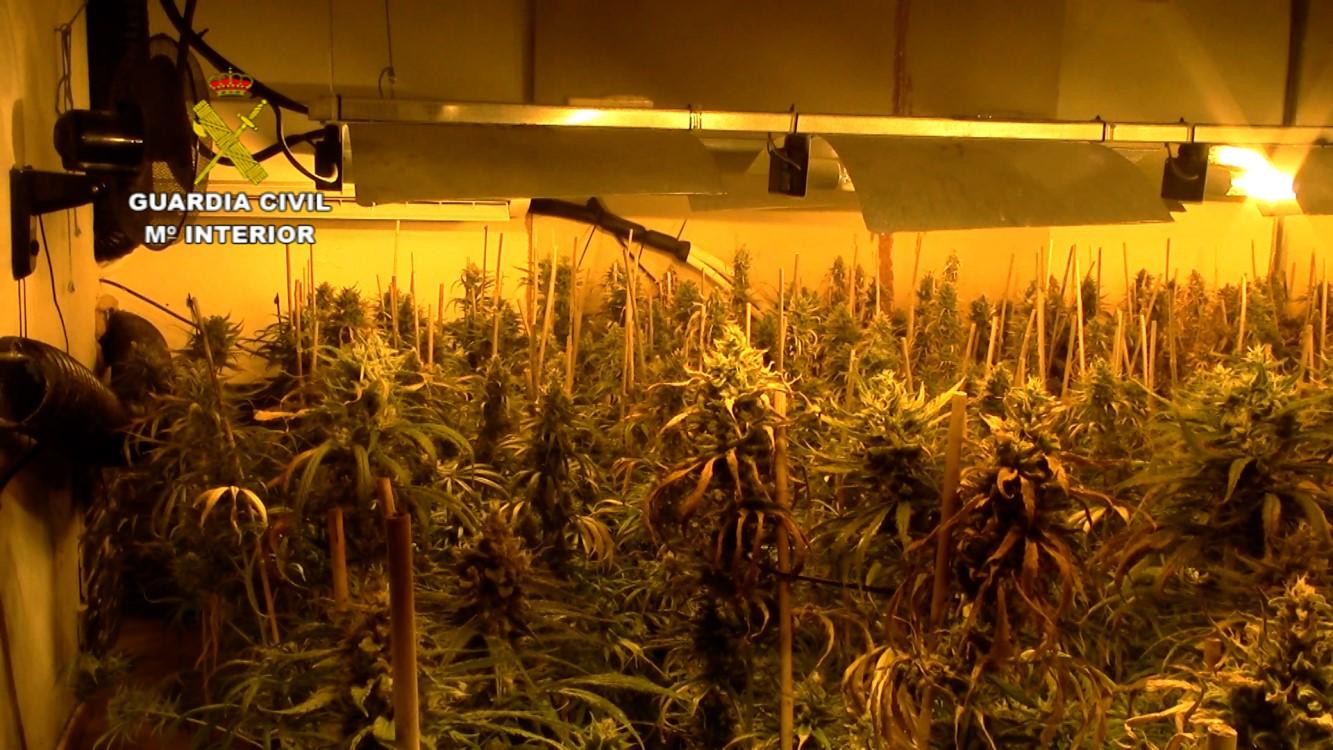La Guardia Civil interviene 6.000 plantas de marihuana, la mayor cantidad en una misma operación en la provincia de Toledo